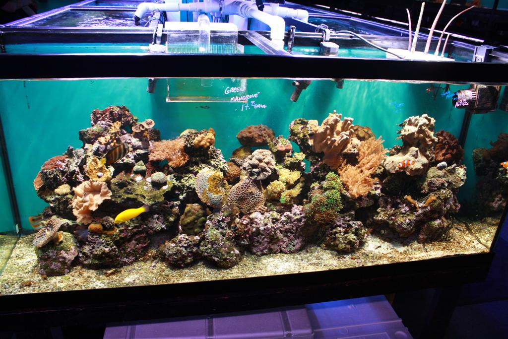My lfs southwest reef company for Reef tank fish