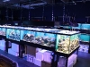 Coral Display Tanks