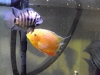 Gold Severum and Convict